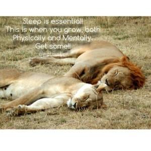 leijonat nukkuu