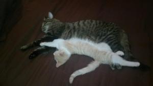 kissat sylikkäin