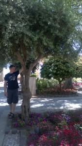valletta upper barracca gardens